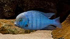 Best Freshwater Aquarium Setup The Ultimate Step By Step Guide In 2020 Freshwater Aquarium Freshwater Aquarium Fish Aquarium Fish