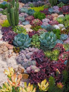 Such a simple idea – a coral reef garden full of dazzling succulents – and s. Such a simple idea – a coral reef garden full of dazzling succulents – and so fun! Philip Withers' imitation of a world seen through water thrilled visitors Succulent Landscaping, Succulent Gardening, Cacti And Succulents, Planting Succulents, Garden Plants, Garden Landscaping, Succulent Rock Garden, Succulent Garden Ideas, Diy Garden