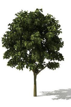 Tree 3Ds Free - 3D Model