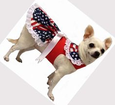 dog CLOTHES | Cute dog clothes: