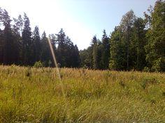 Zagajnik sosnowy w lesie przy Kruklankach.