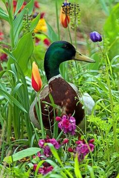 Duck and flowers.  Beautiful photo.