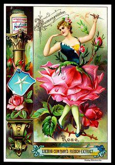 Liebig S445 Flowers Girls 1895 #5 by cigcardpix, via Flickr