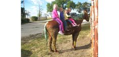 Elite Equine Veterinary Services | Equine Chiropractic | Photo Gallery | Elite Equine Veterinary Services, Halloween Costume Contest, Chiropractic, Photo Galleries, Pets, Gallery, Animals, Animais, Animales