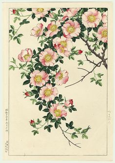 "Rose Drawing Japanese Wood block print, ""Wild Rose Vine"" by Nishimura Hodo Art Floral, Floral Rosa, Illustration Botanique, Illustration Blume, Botanical Illustration, Botanical Flowers, Botanical Prints, Impressions Botaniques, Rose Vines"