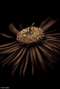 "araknesharem: "" untitled.jpg by alan shapiro photography on Flickr. """