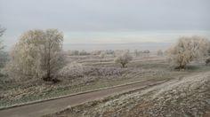 Elbwiesen am Morgen
