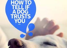 You may be wondering how to tell if a dog trusts you. Here is a bunch of helpful ways that can help you determine if a dog trusts you.