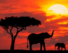 wild life mother and baby elephant silhouetted at sunrise kenya prints posters African Elephant, African Safari, African Art, Silhouette Fotografie, Elephant Wallpaper, The Animals, Baby Animals, Elephant Silhouette, African Sunset