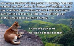 Funny pictures about I too believe in its power. Oh, and cool pics about I too believe in its power. Also, I too believe in its power. Funny Captions, Funny Memes, Pet Memes, I Love Dogs, Puppy Love, Funny Dogs, Funny Animals, Adorable Animals, Baby Animals