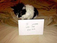 cool Hall Of Shame - Animal Version (28+ Pictures)