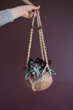 Macrame Hanging Planter with Kokedama Moss Bowl- BOWL