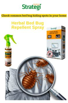 Herbal Strategi Bed Bug Spray: Get rid of bed bugs (Khatmal Marne Ki Dawa) without the use of chemicals. A bedbug-infested house is one of the most common. Bed Bug Control, Pest Control, Household Cleaning Tips, Cleaning Hacks, Bed Bug Spray, Rid Of Bed Bugs, Bed Bugs Treatment, Azadirachta Indica, Bed Bug Bites