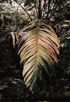 leaf #dailyconceptive #diarioconceptivo