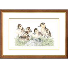 'Innocent Beginnings' - Ducklings Beautiful Series, British Wildlife, Local Parks, Detailed Drawings, Watercolor Pencils, Ducks, Frame, Artist, Prints