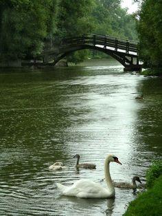 Swan Song Manor