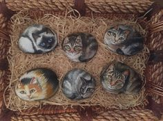 Painted Animals on Rocks  Cats  Painted Rocks