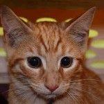 TBD Cats | NYC AC&C Urgent Cats