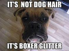 Image result for boxer dog meme #boxerdog #boxerpuppy Boxer Dog Quotes, Dog Quotes Funny, Dog Memes, Funny Dogs, Boxer Memes, Funny Boxer Puppies, Funny Animals, Dog Sayings, Animal Jokes
