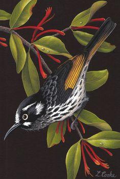 Australian Wildflowers, Australian Animals, Australian Art, Tropical Birds, Colorful Birds, New Holland Honeyeater, Bird Embroidery, Bird Artwork, Bird Illustration