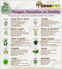 Plantas Aromáticas Octubre