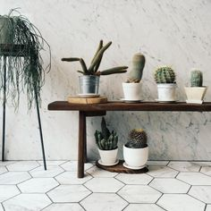 Cactus - carefree houseplant | VSCO