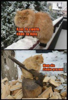 Funny Chicken Memes, Chicken Humor, Wtf Funny, Funny Cats, Funny Animals, Cat Memes, Funny Memes, Jokes, Polish Memes