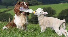10 hihetetlen állati örökbefogadás