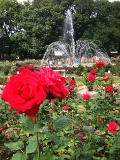 Stop and smell the roses at the Columbus Park of Roses.  You can view flowers of every color and maybe a wedding or two...for absolutely free!