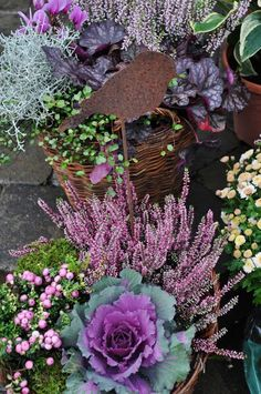 - With the arrival of rains and falling temperatures autumn is a perfect opportunity to make new plantations Winter Planter, Fall Planters, Love Garden, Garden Pots, Container Plants, Container Gardening, Vegetable Gardening, Autumn Inspiration, Garden Inspiration
