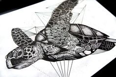 Geometric turtle on Behance