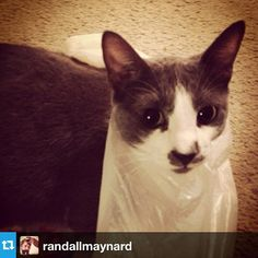 """""""He did this to himself #plasticbag #hubris"""" #CatsOfCracked"""