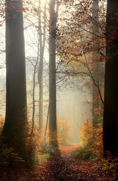 wowtastic-nature:misty autumn morning by  Bart Ceuppens on 500px.com