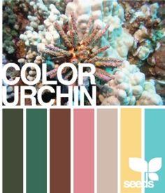 Colour Scheme by Olivia Taylor