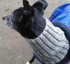I searched everywhere for a free pattern to knit a snood for retired greyhounds to no avail so I made up my own to share.