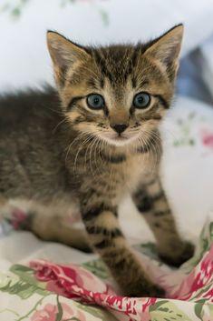 A lovely cute kitten #cute #lovely #kitten #cat #cuteanimals #TheWorldIsGreat