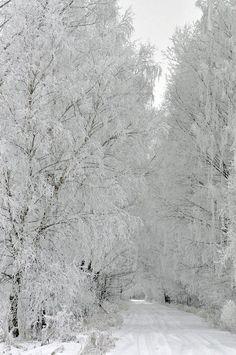 Podlasie - North East of Poland during winter - Polish Wonderland