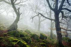 Ancient woodland, Peak District, UK