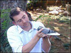 Training racing pigeons is really fun! <3