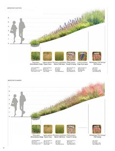 Sustainable Ecology Landscape ISBN: Size: mm Page: meadow through 2 seasons Landscape And Urbanism, Landscape Architecture Design, Architecture Graphics, Landscape Plans, Landscape Drawings, Urban Landscape, Architecture Jobs, Landscape Designs, Ecology Design