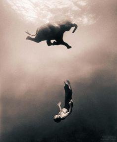 even elephants float