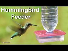 Hummingbird Feeder How To Make A Diy Hummingbird Feeder Out Of Upcycle A Tequila Bottle Into A Hummingbird Feeder How Tos Diy 16 Diy Homemade Hummingbird Feeder Ideas To Attract Them To Your 27 Homemade… Make A Bird Feeder, Homemade Bird Feeders, Humming Bird Feeders, Hummingbird Food Diy, Homemade Hummingbird Nectar, How To Build Abs, Butterfly Feeder, Bird House Kits, Bird Houses Diy
