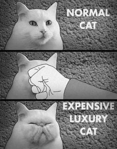 Stupid ugly rich-people-cats.