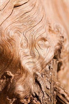 Face on tree