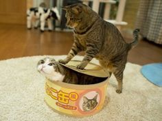 Hana! Let Maru out of the box!