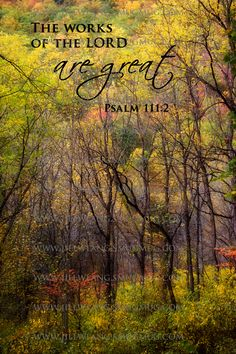 Psalm 111:3 ~ The works of the Lord are great!!