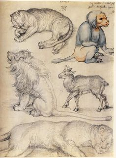 Albrecht Dürer ~ Studies of Animals, 1521 Medieval Art, Renaissance Art, Illustrations, Illustration Art, Animal Drawings, Art Drawings, Albrecht Dürer, Drawing Studies, Jan Van Eyck