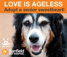 November is Adopt a Senior Pet Month. If you're ready to add a furry best friend to your family, please consider adopting a senior pet. Nobody appreciates a home more than a wise, older pet. | Best Friends Animal Society