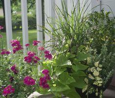 Lots of container gardening ideas! Start planning your spring projects! Spring Projects, Patio Plants, Beautiful Gardens, Container Gardening, Most Beautiful Pictures, Bloom, Sun Perennials, Flowers, Dennis