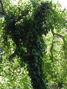 naturally shaped Shapes, Garden, Nature, Plants, Garten, Naturaleza, Gardening, Plant, Outdoor